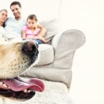 family attorney lawyer pet custody stipulation california