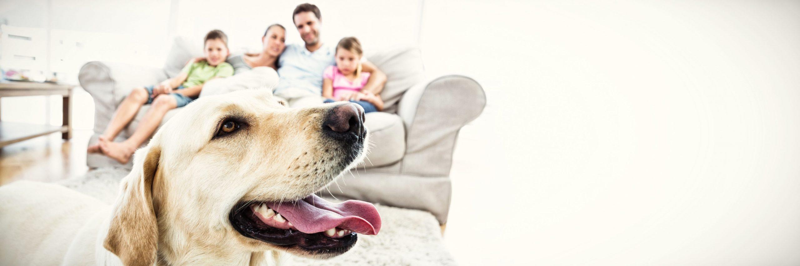 family attorney lawyer pet custody stipulation california